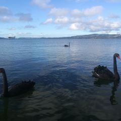 Virginia Lake User Photo