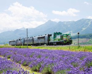 Summer Vacation in Japan: Things to do in Hokkaido