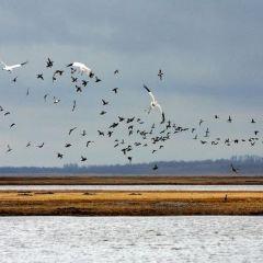 Momoge National Nature Reserve User Photo