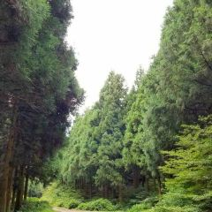Saryeoni Forest Path User Photo