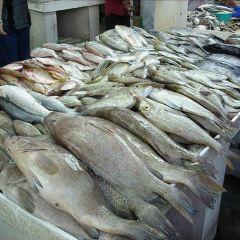 Dubai Fish Market User Photo