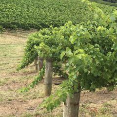 Nepenthe Wines用戶圖片