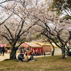 Maizuru Park User Photo