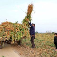 Shagou Lake Agricultural Demostration Park User Photo