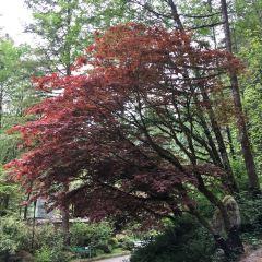 Nitobe Memorial Garden User Photo