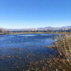 Caicun Wetland Park User Photo