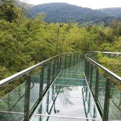 Bamboo Glass Walkway User Photo