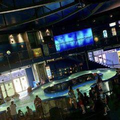 Bristol Aquarium User Photo