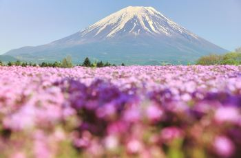 Impressive Flower Fields