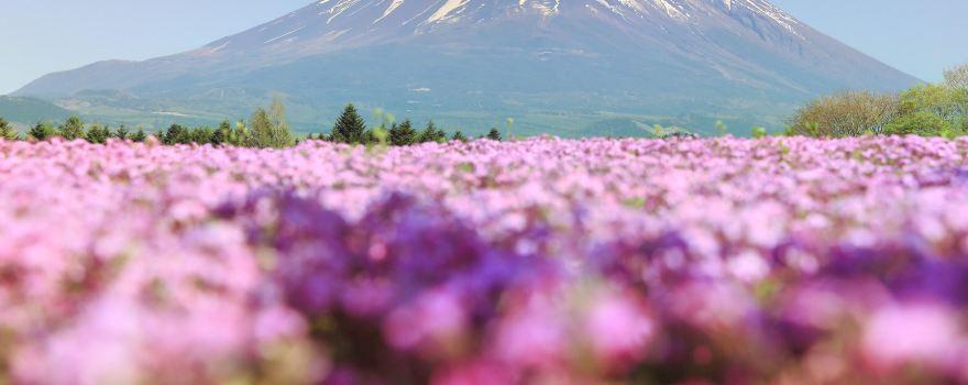 Impressive Flower Fields