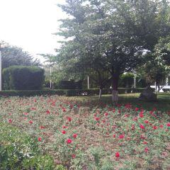 桜花広場のユーザー投稿写真