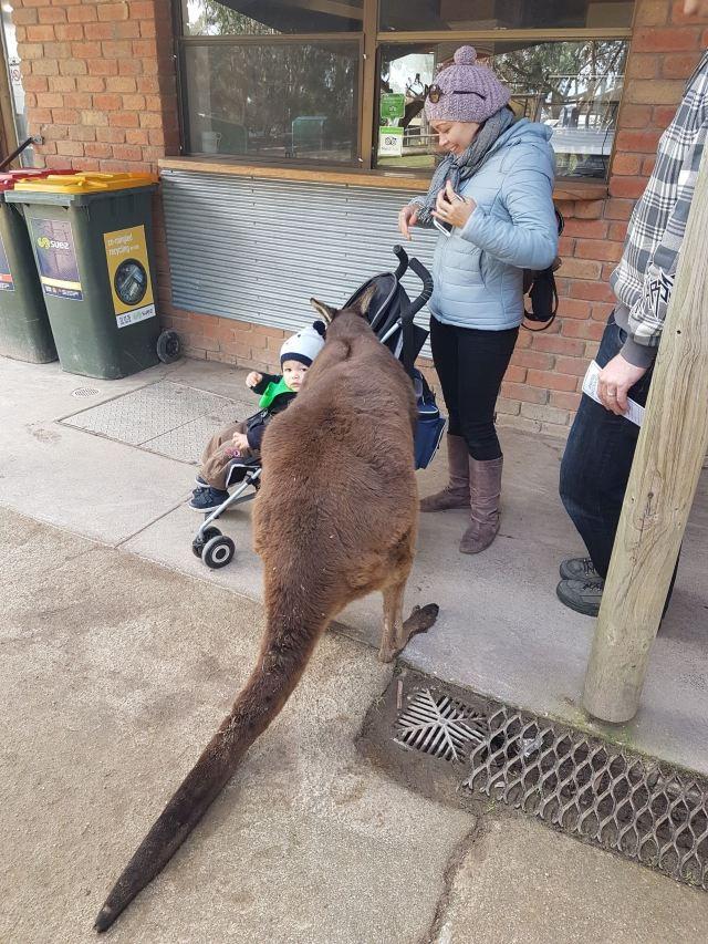 巴拉瑞特野生動物園