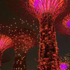 Supertree Grove User Photo