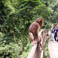 어메이산(아미산) 자연 생태 원숭이 보호구역 여행 사진