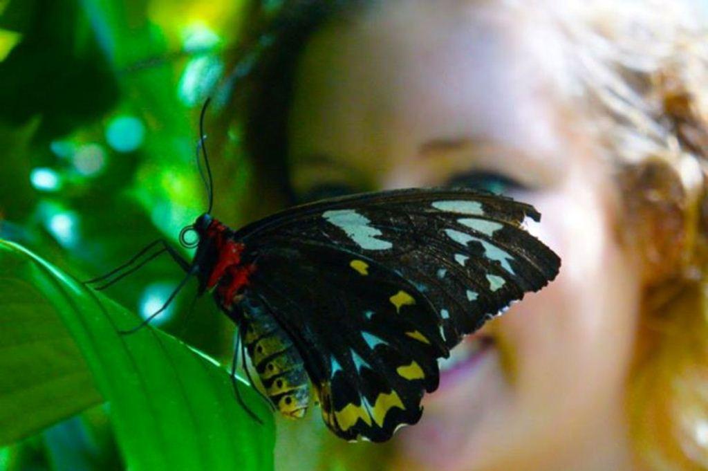 Australian Butterfly Sanctuary Cairns Ticket