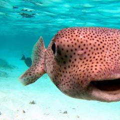Ocean Junkies Dive Centre張用戶圖片