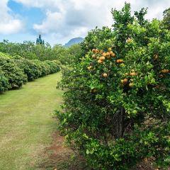 Kilohana Plantation Estate User Photo