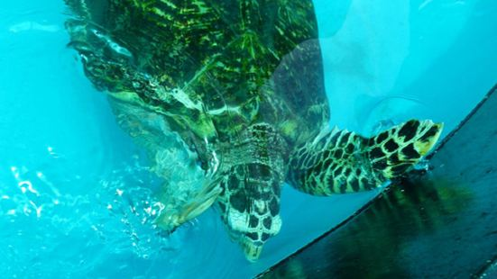 Sea Turtle Conservation Centre