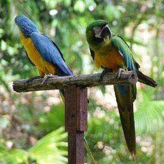 洛高宜野生動物園用戶圖片