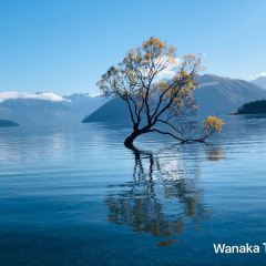 That Wanaka Tree User Photo