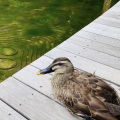 豪斯湖用戶圖片
