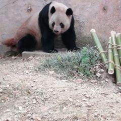 옌청 야생동물원 여행 사진