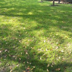 Tauranga Memorial Park User Photo
