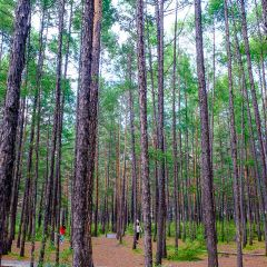松苑原始森林公園用戶圖片