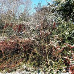 Rizhao Botanical Garden User Photo