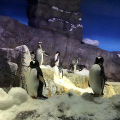 大阪海洋博物館用戶圖片