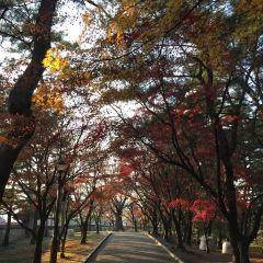 대릉원 여행 사진