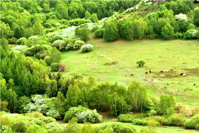 柳樹溝森林公園