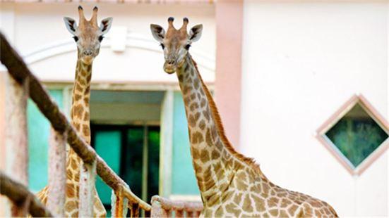 Zhengzhou Zoo