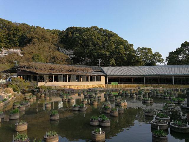 Dazaifu Tenmangū Shrine