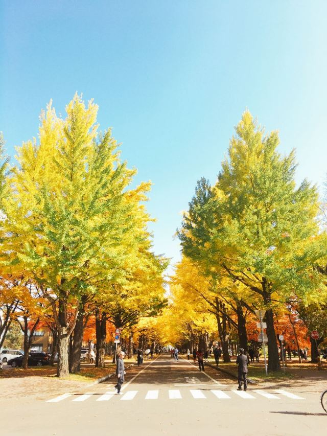 홋카이도 대학교