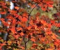 Hongshi National Forest Park User Photo