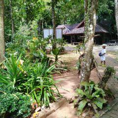 Than Bok Khorani National Park User Photo