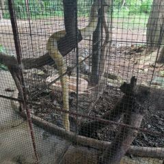 Palawan Wildlife Rescue and Conservation Center User Photo