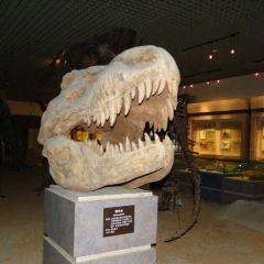大連自然博物館用戶圖片
