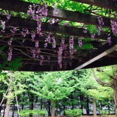 나카지마 공원 여행 사진