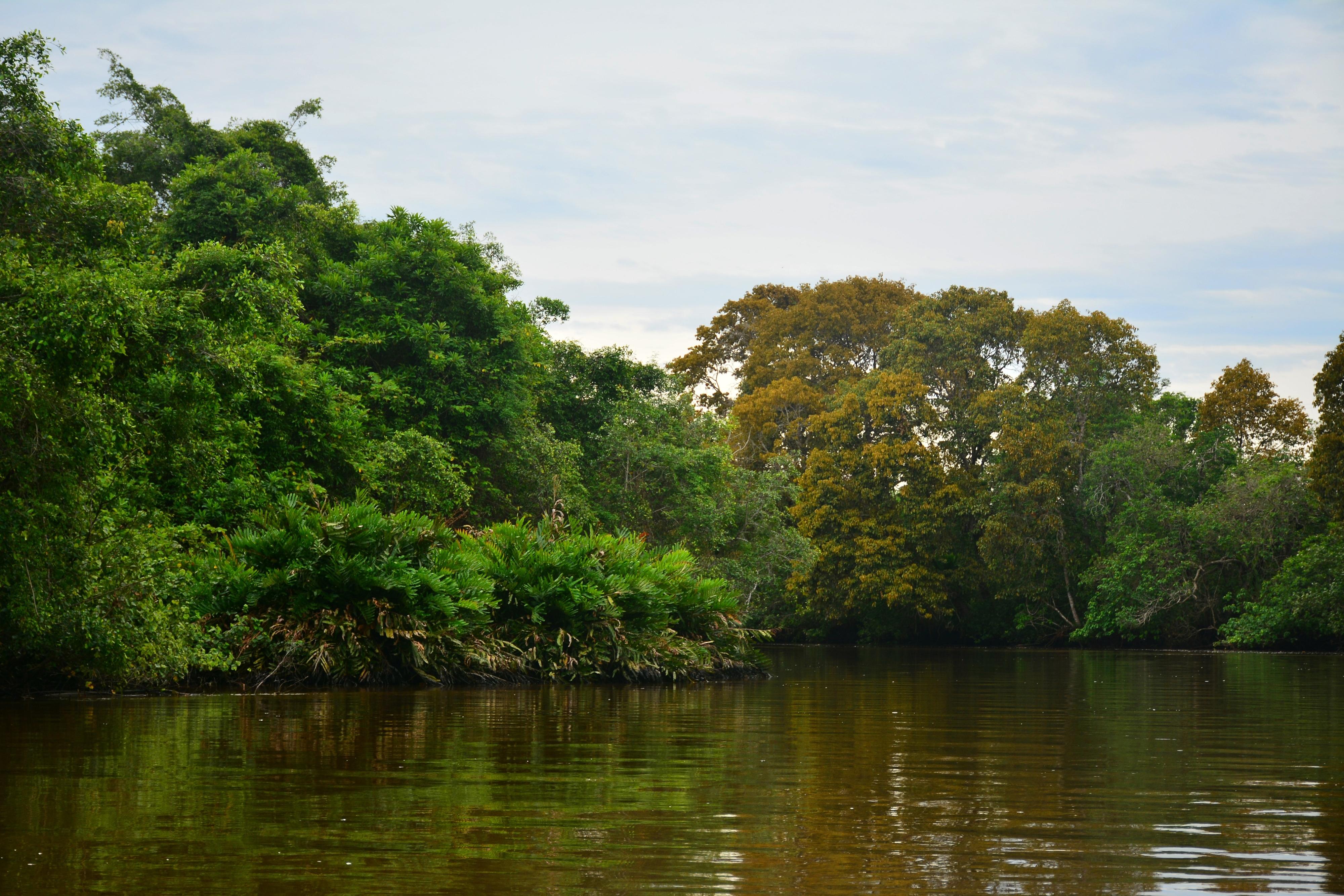 Klias Mangrove