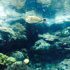 米蘭水族館和市政水生生物站-時刻表,價格,信息用戶圖片