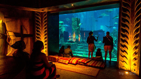 1-Day Pass for Atlantis Aquaventure and The Lost Chambers