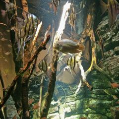 丹麥國立水族館用戶圖片