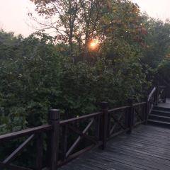南屏山森林公園用戶圖片