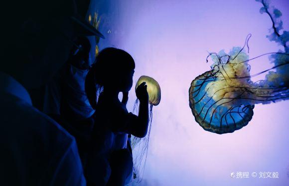 上海海洋水族館門票