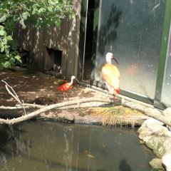鹿特丹動物園用戶圖片