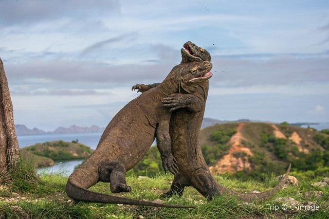Komodo National Park – A Land that Time Forgot