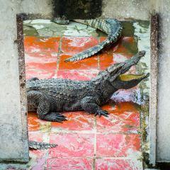 Battambang Crocodile Farm User Photo