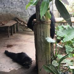 馬來西亞國家動物園用戶圖片